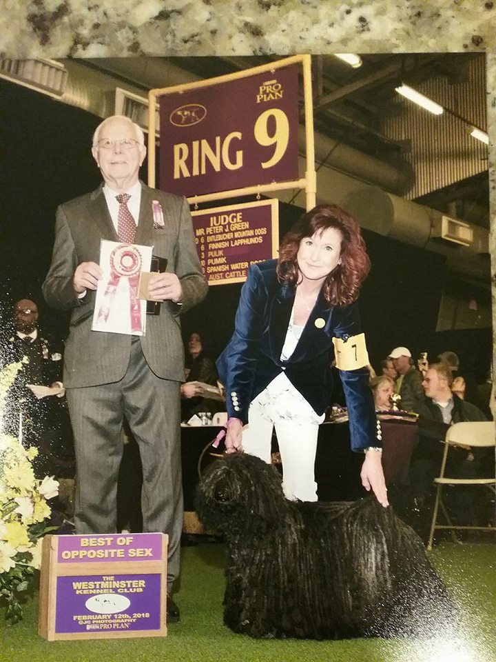 Zoe - Wins Best of Opposite sex at Westminster Kennel Club, February 12, 2018