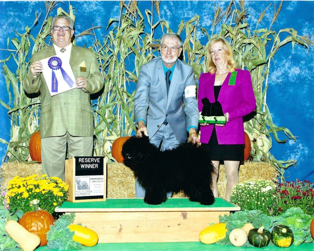 Tricks wins Reserve Winners Bitch at 10 Months at PCA Specialty in Wisconsin