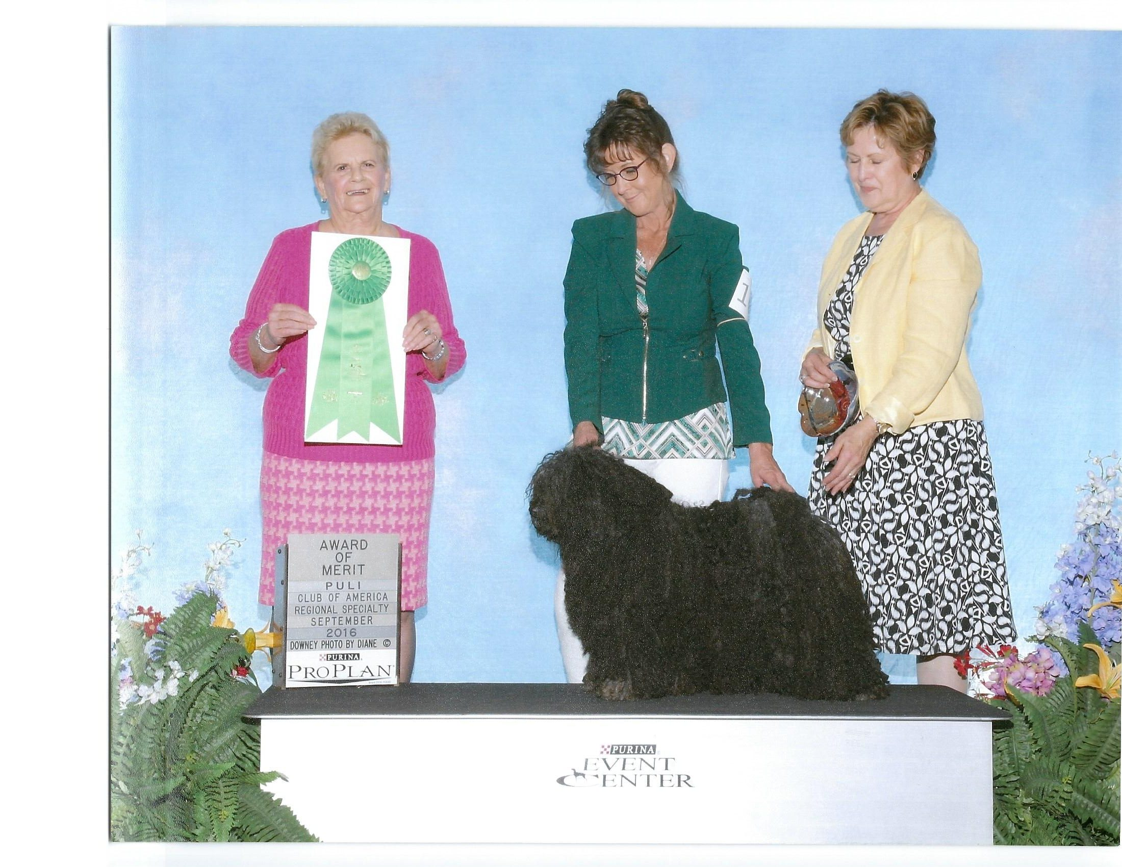 Zoe wins Award of Merit at PCA Regional Specialty in Missouri, September 2016